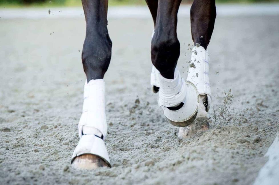 Leg Care for Horses